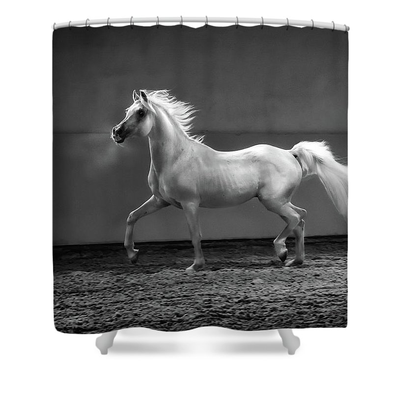 Horse Shower Curtain featuring the photograph Proud Arabian Horse - Stallion In by Kerrick