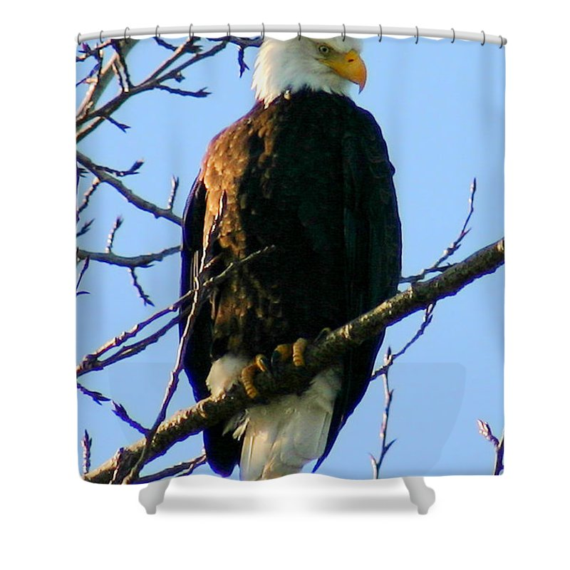 Eagle Shower Curtain featuring the photograph Proud by Mac Kenney