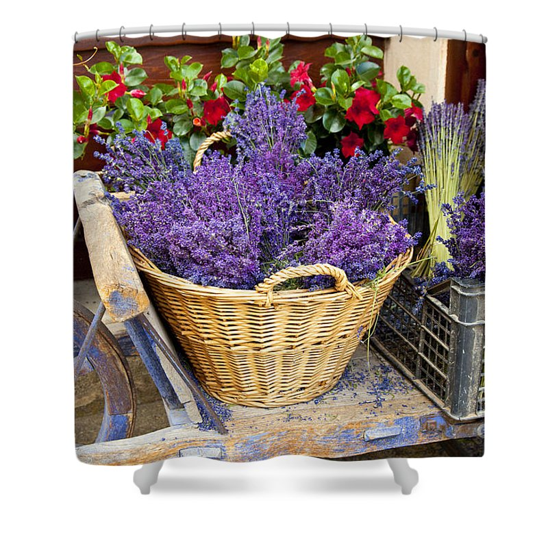 Lavender Shower Curtain featuring the photograph Provence Lavender by Brian Jannsen