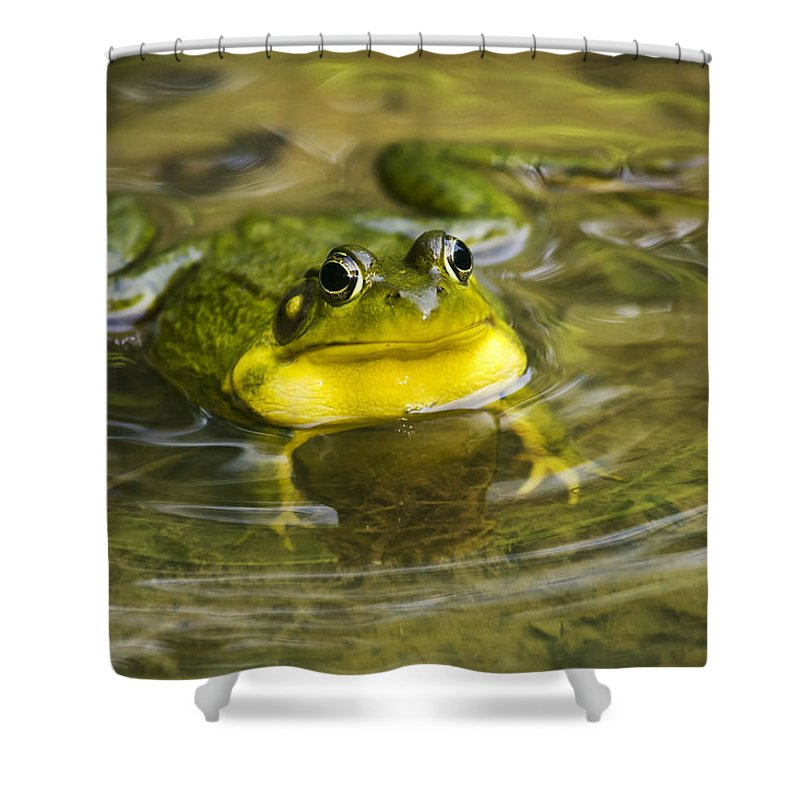 Frog Shower Curtain featuring the photograph Puddle Jumper by Christina Rollo