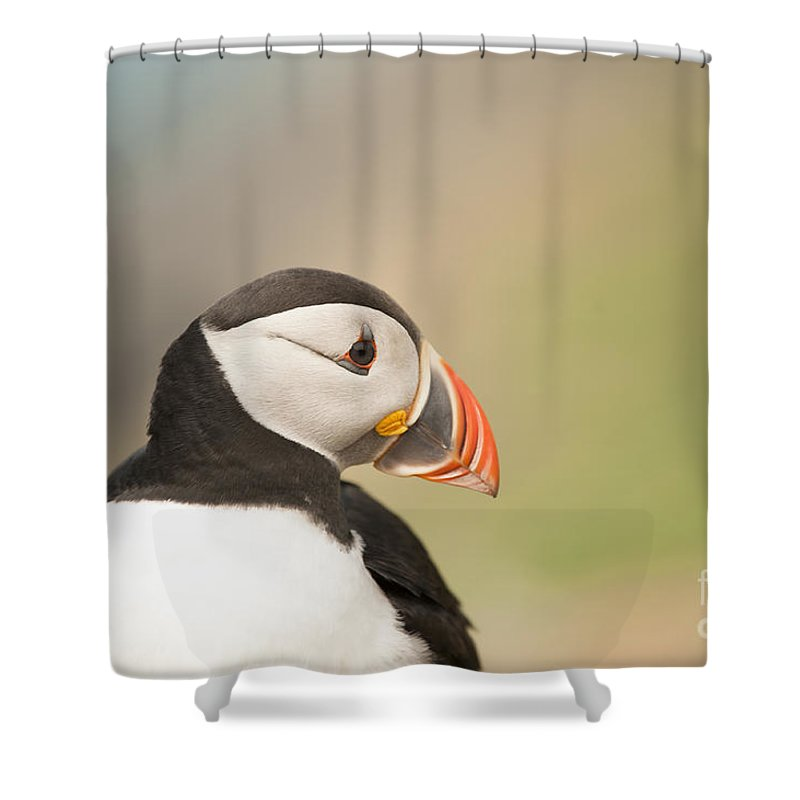 Puffin Shower Curtain featuring the photograph Puffin Profile by Anne Gilbert
