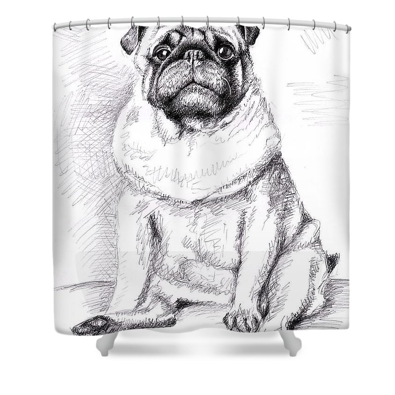 Dog Shower Curtain featuring the drawing Pug Anton by Nicole Zeug