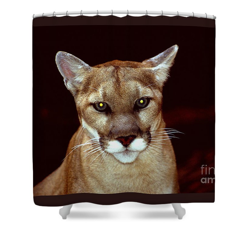 Lion Shower Curtain featuring the photograph Puma by Gary Gingrich Galleries