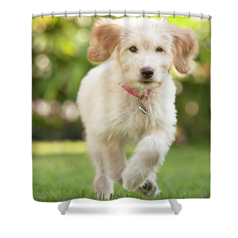 Pets Shower Curtain featuring the photograph Puppy Running Through The Grass by Chris Stein
