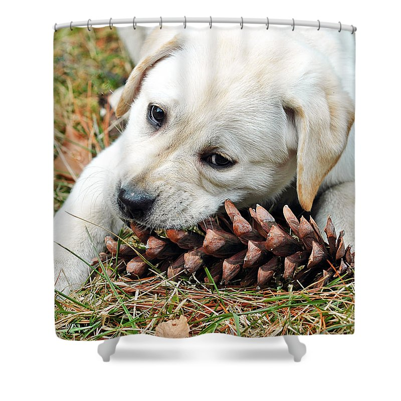 Animals Shower Curtain featuring the photograph Puppy With Pine Cone by Lisa Phillips