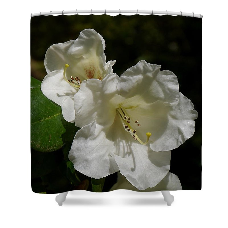 Rhododendron Shower Curtain featuring the photograph Pure Spring by Christiane Schulze Art And Photography