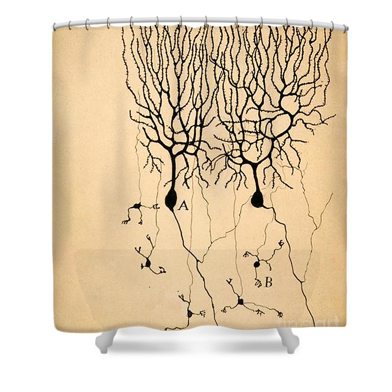 Biological Shower Curtains
