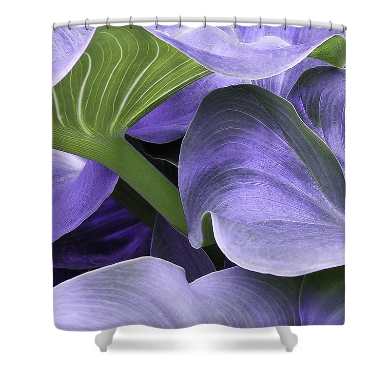 Calla Lily Shower Curtain featuring the photograph Purple Calla Lily Bush by Richard J Thompson