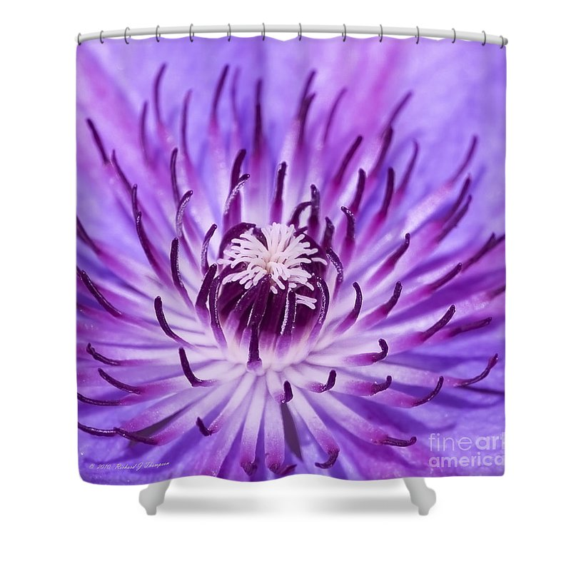 Clematis Shower Curtain featuring the photograph Purple Clematis by Richard J Thompson