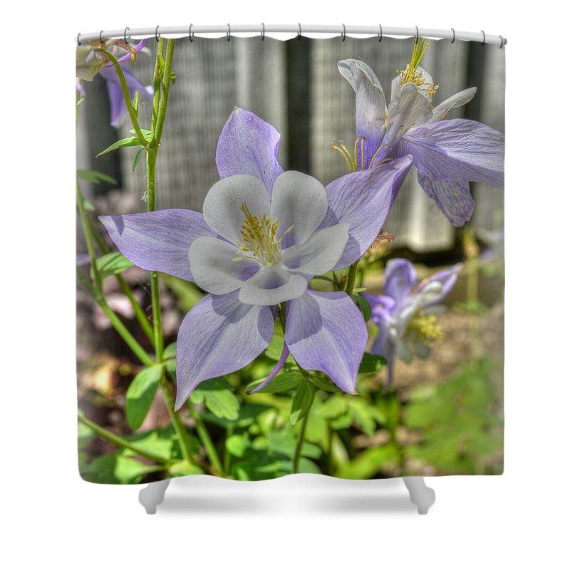 Flowers Shower Curtain featuring the photograph Purple Columbine by Linda Covino