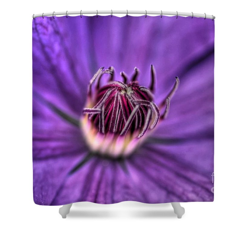 Clematis Shower Curtain featuring the photograph Purple Crown by Chris Fleming