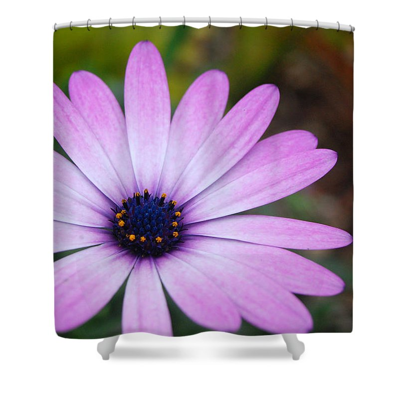 Flower Shower Curtain featuring the photograph Purple Daisy by Amy Fose