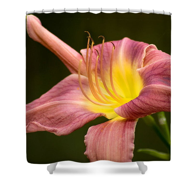 Flower Shower Curtain featuring the photograph Purple Daylily by Benjamin Reed