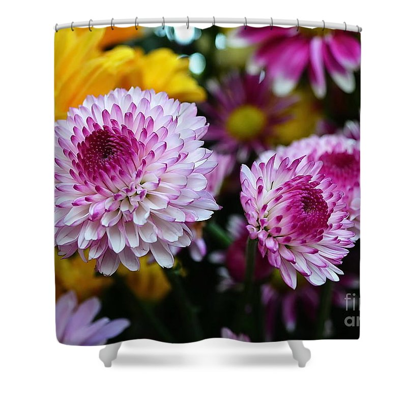 Michelle Meenawong Shower Curtain featuring the photograph Purple Explosion by Michelle Meenawong