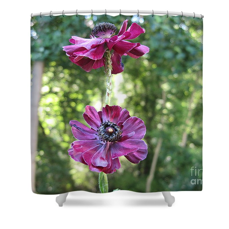 Trees Shower Curtain featuring the photograph Purple Flowers by HEVi FineArt