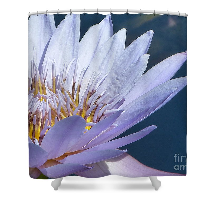 Flower Shower Curtain featuring the photograph Purple Glory II by Marguerita Tan