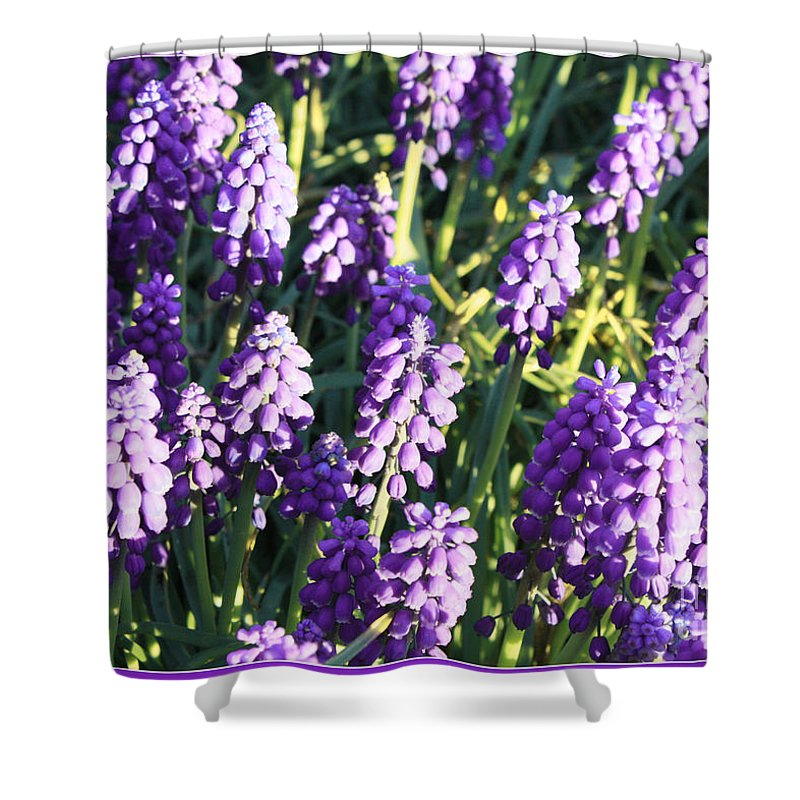 Grape Hyacinth Shower Curtain featuring the photograph Purple Grape Hyacinth by Carol Groenen