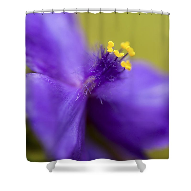 Floral Shower Curtain featuring the photograph Purple Haze by Caitlyn Grasso