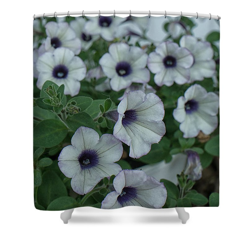 Geraniums Purple Heart Shower Curtain featuring the photograph Purple Heart by Brothers Beerens