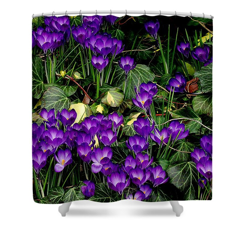 Fine Art Shower Curtain featuring the photograph Purple Hearts by Rodney Lee Williams