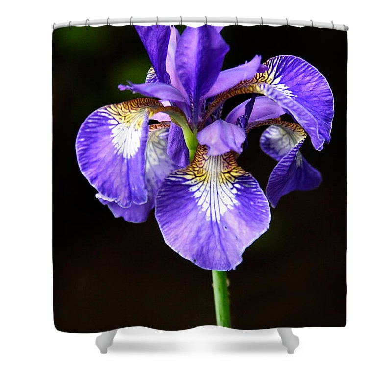 3scape Photos Shower Curtain featuring the photograph Purple Iris by Adam Romanowicz