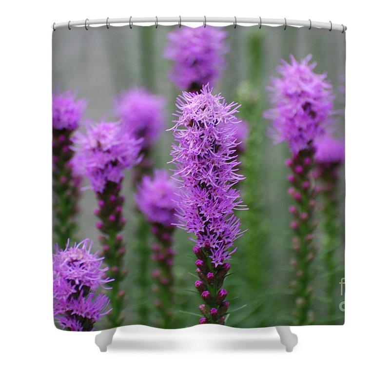 Liatris Shower Curtain featuring the photograph Purple Liatris Flowers by DejaVu Designs