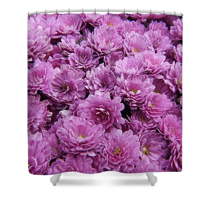 Mums Shower Curtain featuring the photograph Purple Mums by Traci Law