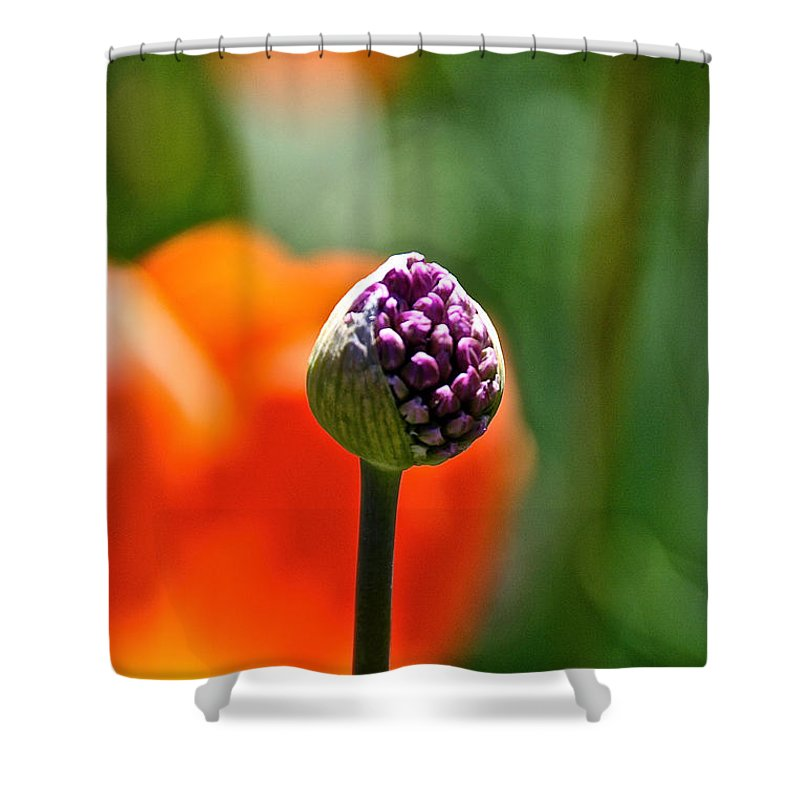 Flower Shower Curtain featuring the photograph Purple Pod by Susan Herber