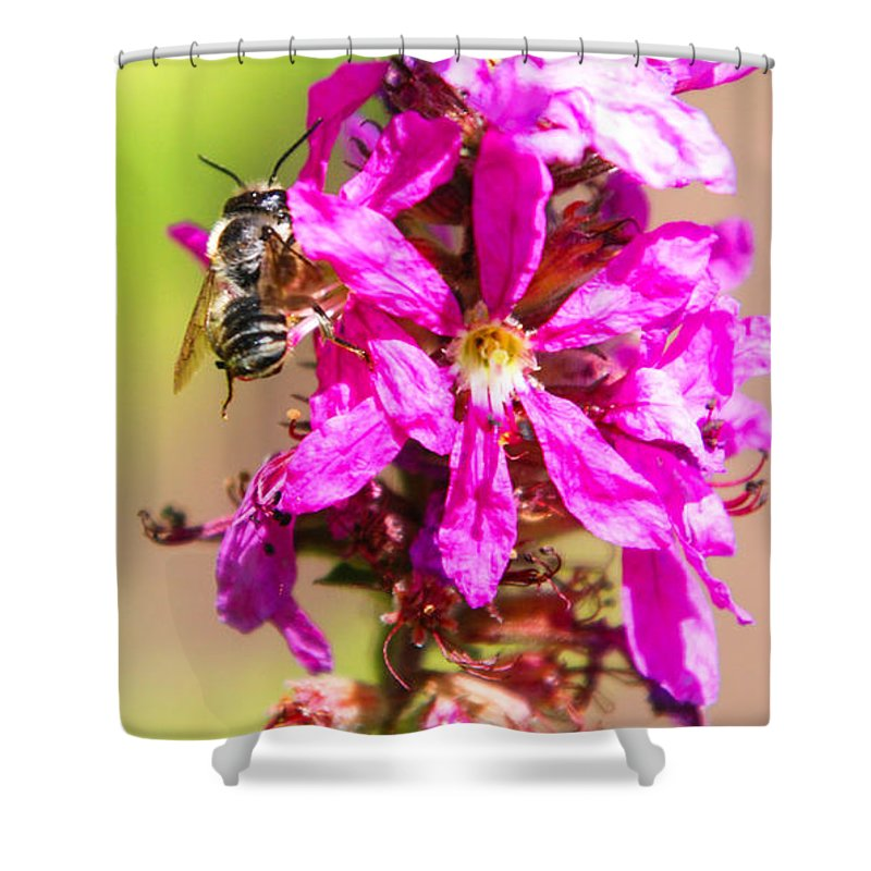 Purple Wild Flower Shower Curtain featuring the photograph Purple Wild Flower by Optical Playground By MP Ray