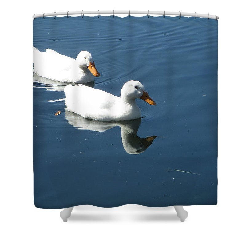 Two White Ducks Shower Curtain featuring the photograph Quackers by Kevin Caudill