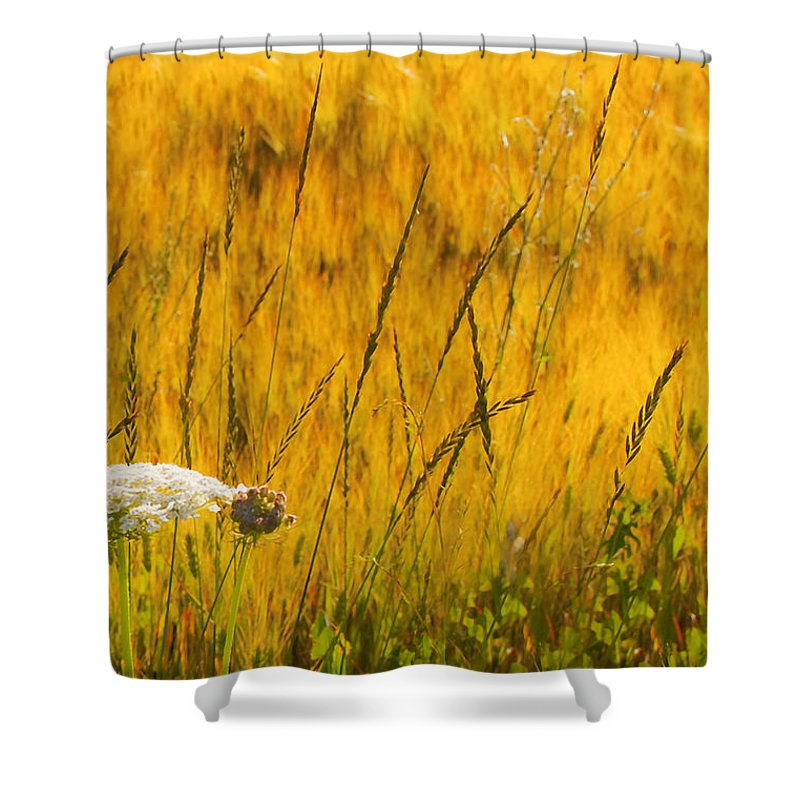 Field Shower Curtain featuring the photograph Queen Anne's Lace by Theresa Tahara