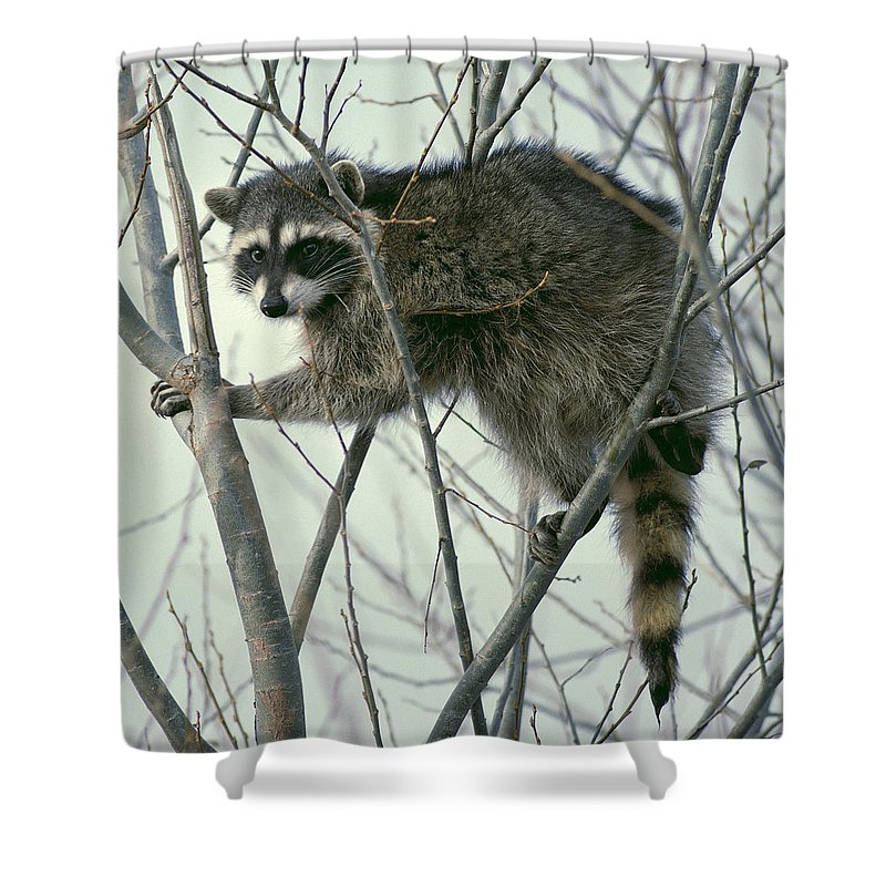 Up A Tree Shower Curtain featuring the photograph Up A Tree by Ellen Henneke