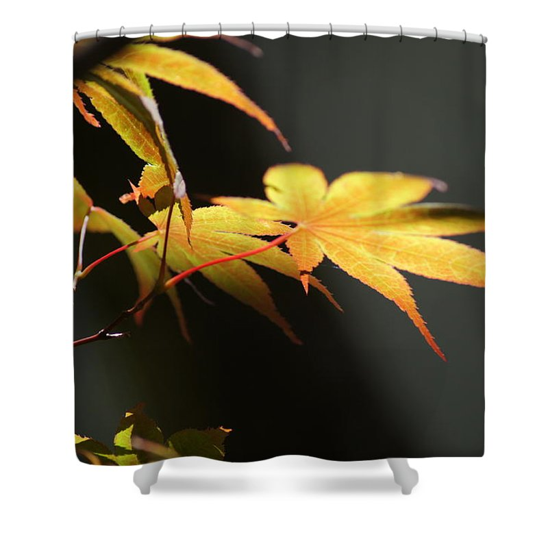 Fall Foliage Shower Curtain featuring the photograph Radiance by Ira Shander