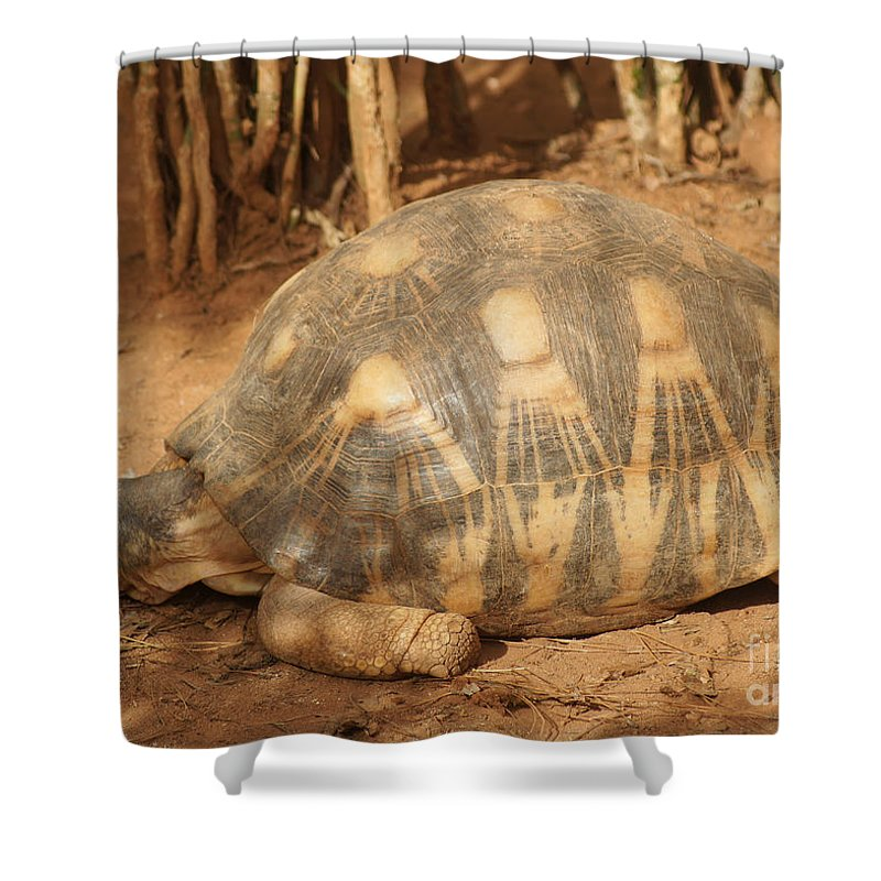 Nature Shower Curtain featuring the photograph radiated tortoise from Madagascar by Rudi Prott