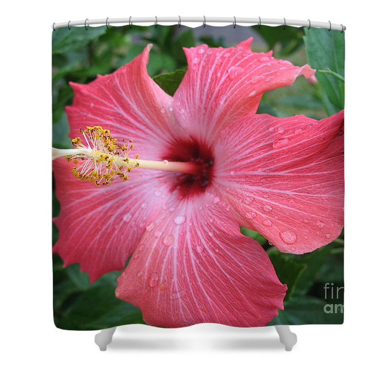 Hibiscus Shower Curtain featuring the photograph Rain Soaked Hibiscus by Christiane Schulze Art And Photography