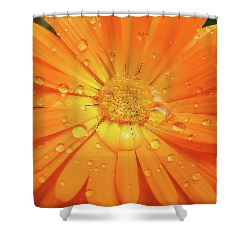 Calendula Shower Curtain Featuring The Photograph Raindrops On Orange Daisy Flower By Jennie Marie Schell
