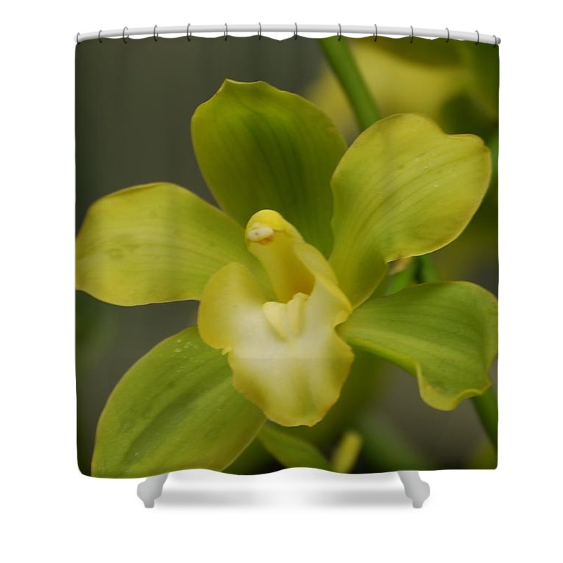 Orchid Shower Curtain featuring the photograph Rare Green Orchid by DejaVu Designs