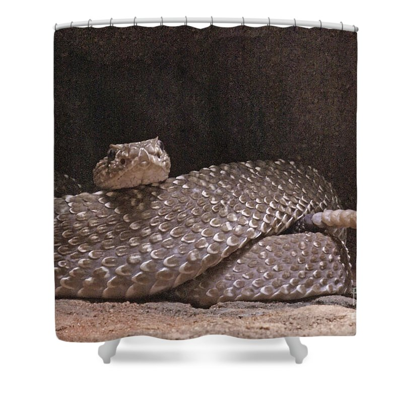 Nature Shower Curtain featuring the photograph Rattlesnake by Rudi Prott