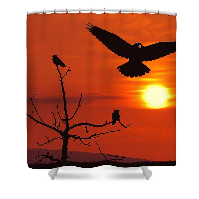 Nature Shower Curtain featuring the photograph Raven Maniac by Ron Day