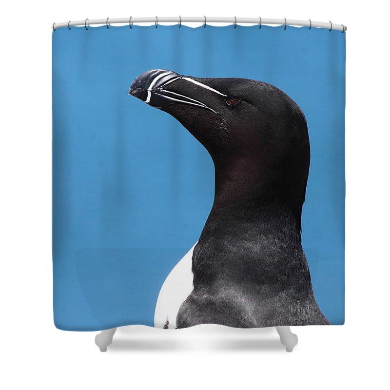 Razorbill Shower Curtains