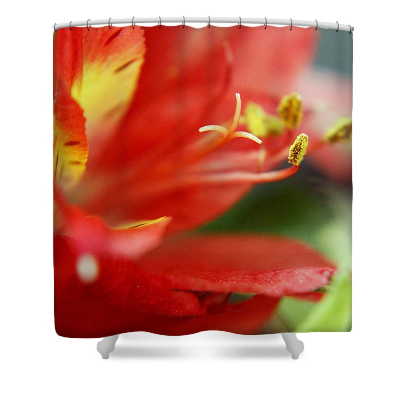 New Growth Shower Curtain featuring the photograph Reach Abstraction Limited Edition Bodecoarts by Robin Lewis