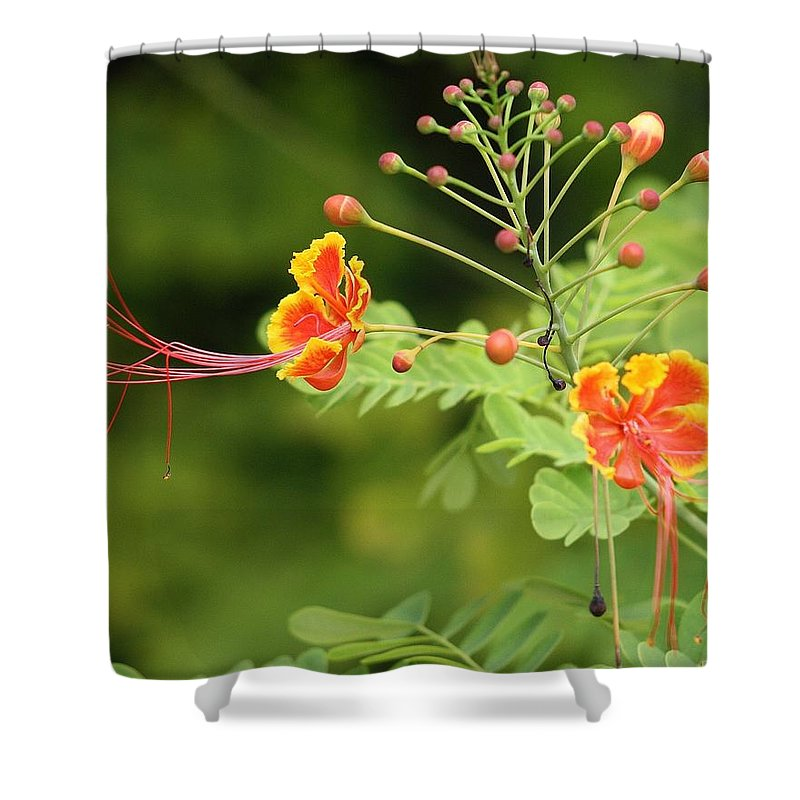 Butterfly Shower Curtain featuring the photograph Reaching by Chuck Hicks