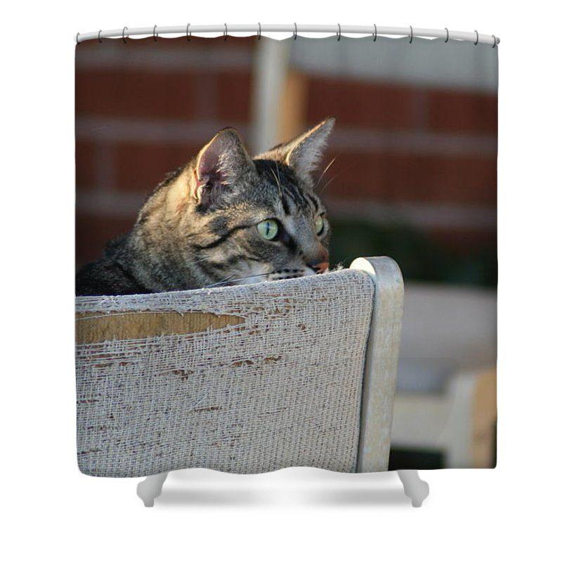 Cat Shower Curtain featuring the photograph Ready by David S Reynolds