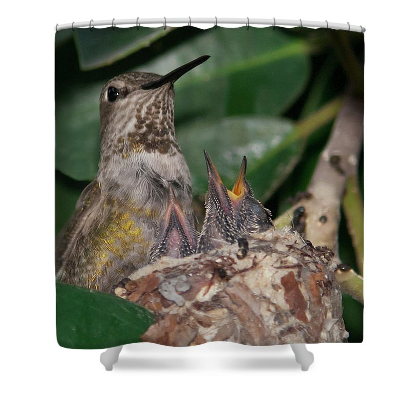 Baby Birds Shower Curtain featuring the photograph Ready For Lunch by Dennis Reagan