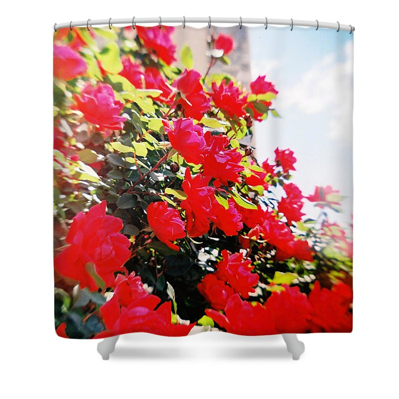 Recesky Shower Curtain featuring the photograph Recesky - Bright Roses by Richard Reeve