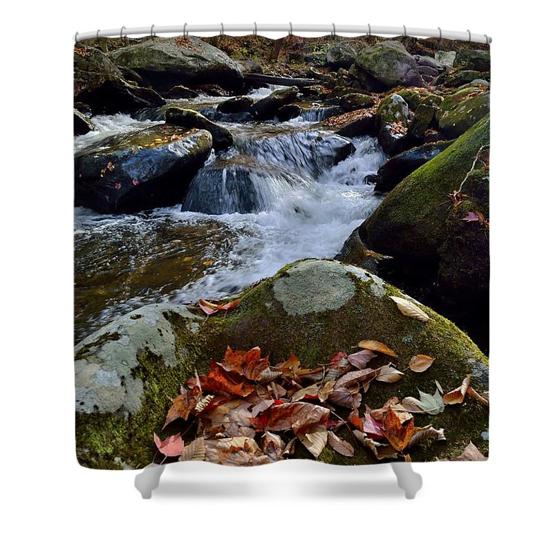 Leaves Shower Curtain featuring the photograph Red And Green And All Things In Between by Patricia Twardzik