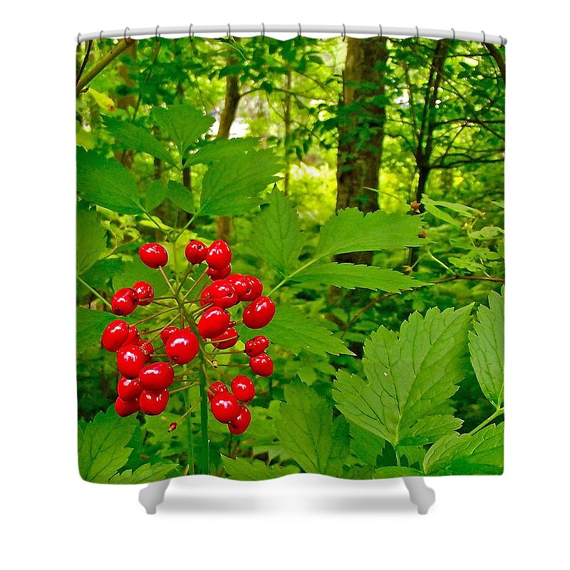 Red Baneberry On Trail Along Rivier Du Nord In The Laurentians North Of Montreal Shower Curtain featuring the photograph Red Baneberry Along Rivier Du Nord Trail In The Laurentians-qc by Ruth Hager