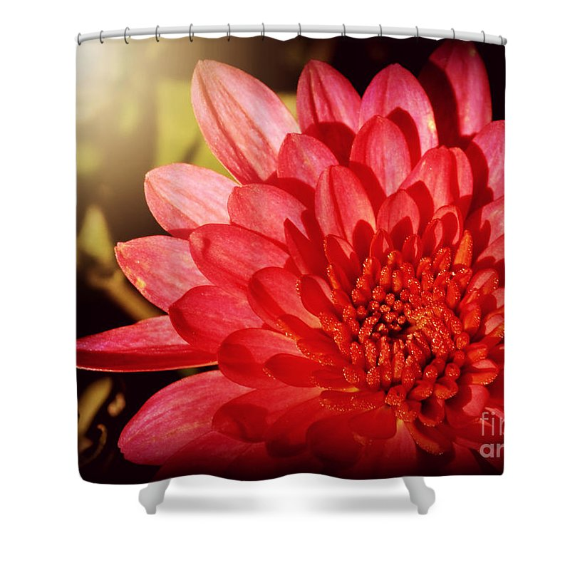 Flowers Shower Curtain featuring the photograph Red Beauty Welcomes The Sun - Flowers Of Summer by Miriam Danar