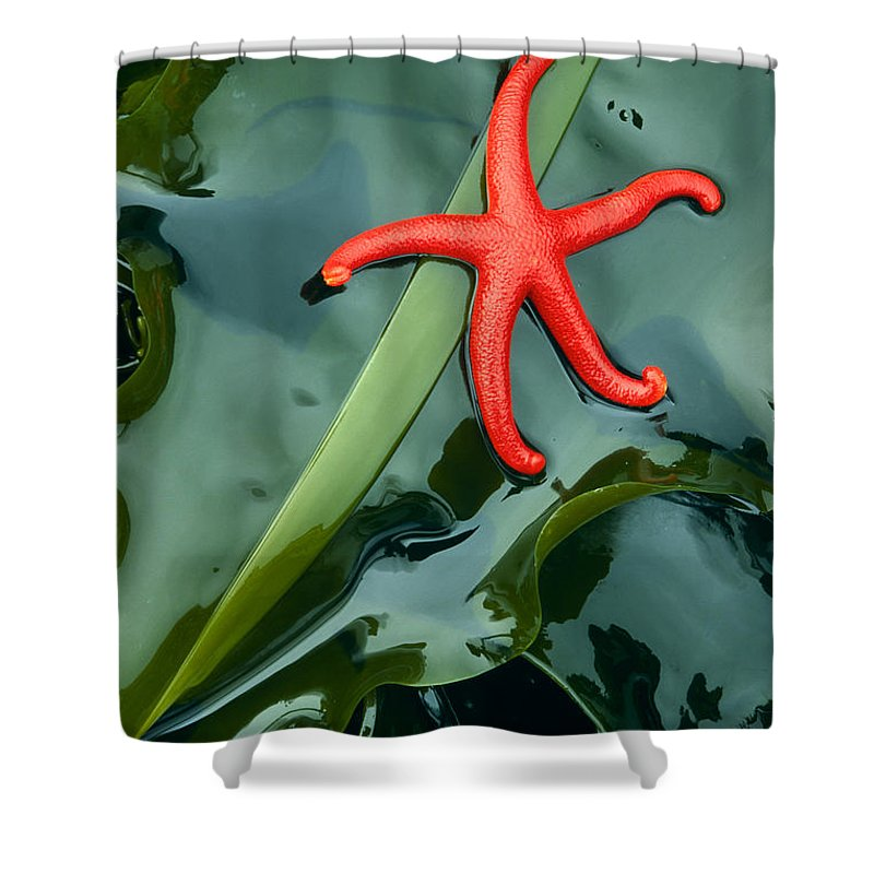 America Shower Curtain featuring the photograph Red Bloodstar by Inge Johnsson
