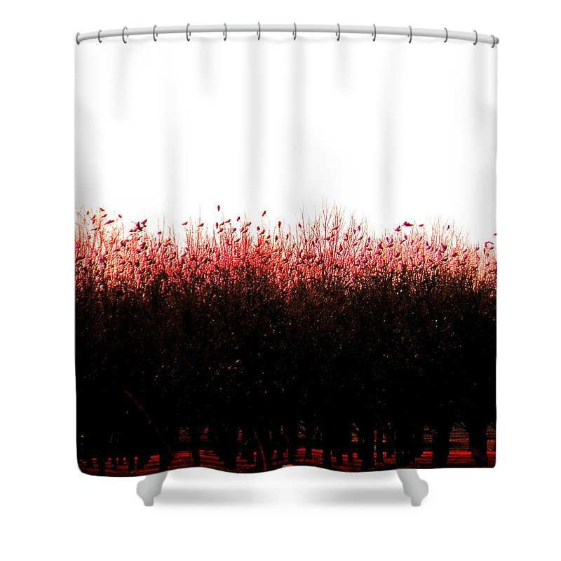 Red Shower Curtain featuring the photograph Red Dawn by M Pace